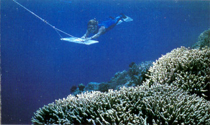 Coral Diseases